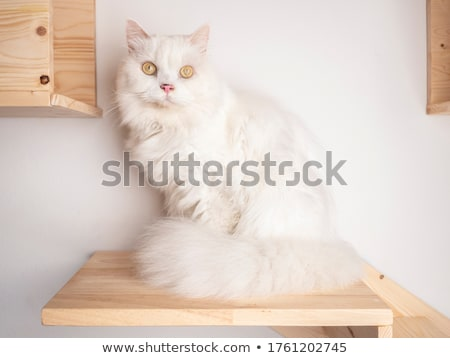 domestic cat enjoy the white photo studio stock photo © vauvau