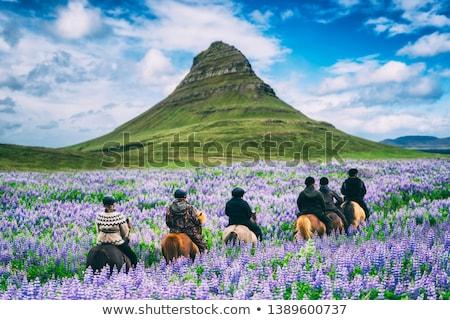 caballos · paisaje · azul · cielo · primavera · hierba - foto stock © mady70