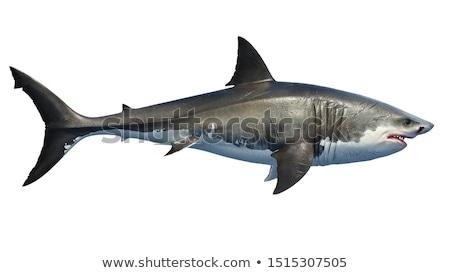 Deniz beyaz köpekbalığı deniz sualtı kabukları Stok fotoğraf © blackmoon979