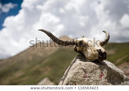 Stenen theorie wolken Blauw reizen vlag Stockfoto © bbbar