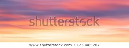 вектора · закат · пальма · силуэта · плакат · Flyer - Сток-фото © fresh_5265954