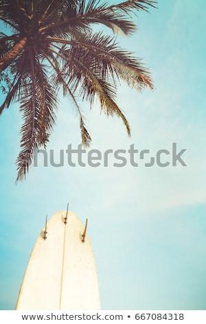 Szörfös szörfdeszka áll tengerpart part portré Stock fotó © wavebreak_media