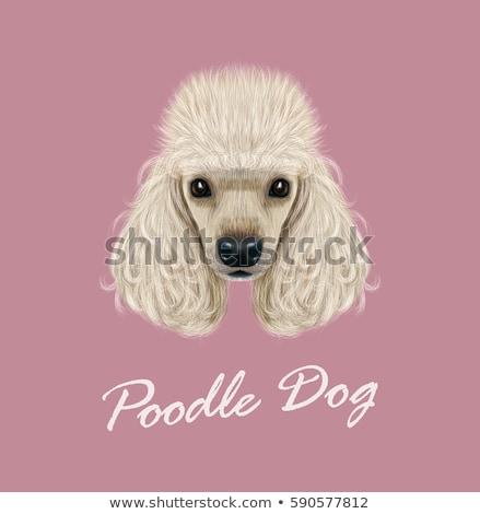 голову черный пудель щенков собака Сток-фото © feedough