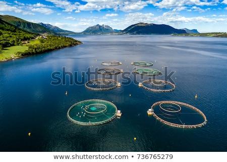 boerderij · zalm · vissen · antenne · fotografie · Noorwegen - stockfoto © cookelma