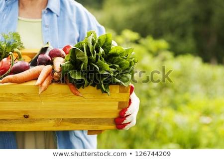 Yeme organik gıda paleo diyet kırmızı Stok fotoğraf © Lightsource