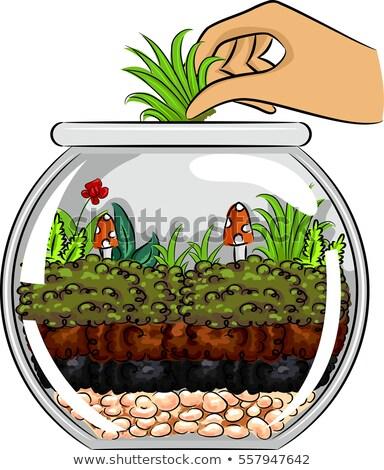 Hand Bowl Terrarium Grass Stock photo © lenm