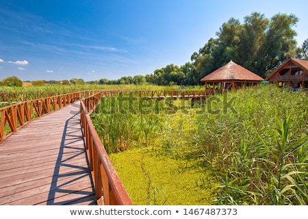 Kopacki Rit marshes nature park bird observation deck and wooden Stock photo © xbrchx
