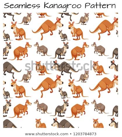 seamless kangaroo pattern scene stock photo © bluering