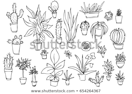Sketch of different pots and succulents. Vector illustration of a sketch style. stock photo © Arkadivna