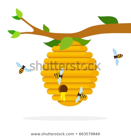 Color Bee Hive House Of Wild Insect On Branch Vector Stock photo © pikepicture