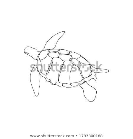 sea turtles swim in the water park stock photo © galitskaya
