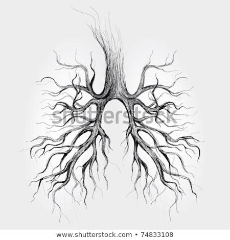 Lungs in Black and White Stock photo © smoki