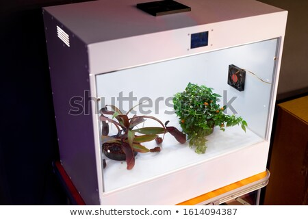 Camera for growing plants where optimal temperature is regularly retained Stock photo © pressmaster