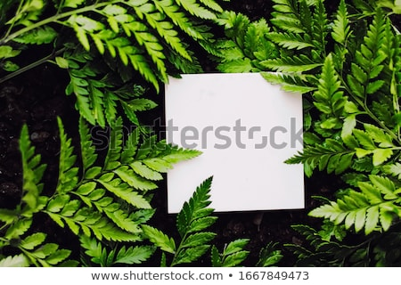 Lege kaart groen gras branding ontwerp natuur frame Stockfoto © Anneleven
