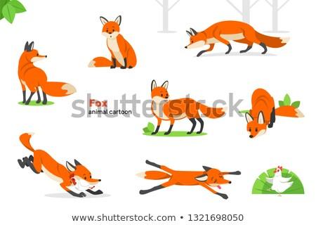 Tot Fuchs Tod Tiere Tier Spiel Stock foto © phbcz