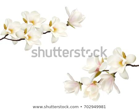 Bella fiore bianco immagine verde bokeh Foto d'archivio © HypnoCreative