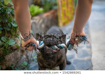 Köpek halat oyuncak iki eğlence oyuncaklar Stok fotoğraf © luapvision
