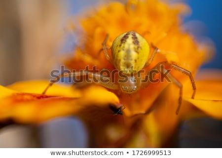 небольшой Spider лист зеленый лист лес свет Сток-фото © michaklootwijk