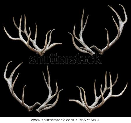 Koponya vágási körvonal emberi izolált fehér akta Stock fotó © winterling
