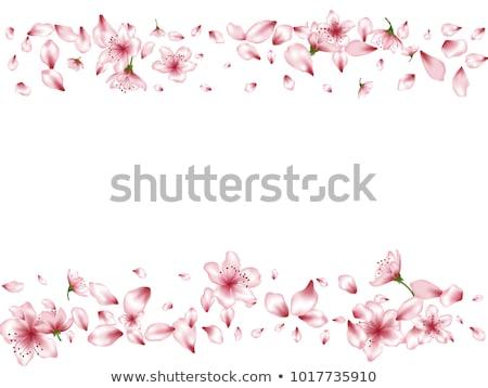 pink apple blossoms border stock photo © elenaphoto