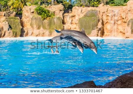 イルカ 高跳び いい 水 ストックフォト © cosma
