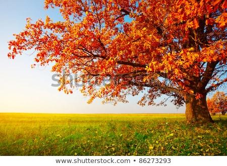 Samotny spadek liści żółty liścia zielone Zdjęcia stock © tainasohlman