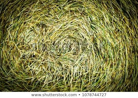 Centrum spirali siano bela tekstury trawy Zdjęcia stock © wellphoto