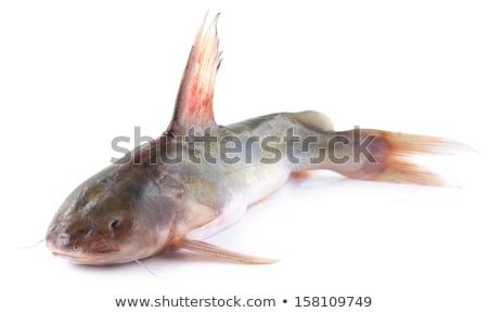 рыбы · Бангладеш · белый · свежие · изолированный · сырой - Сток-фото © bdspn