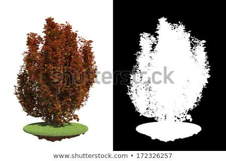 Izolált piros bokor részlet maszk fehér Stock fotó © tashatuvango