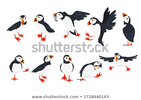 gyönyörű · ritka · madár · tenger · fekete · sziget - stock fotó © jarin13