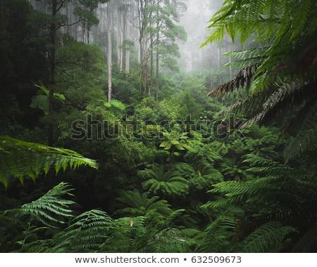 тропические · дороги · растительность · сторона · синий - Сток-фото © joyr