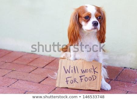 perro · trabajo · funny · hambriento · sin · hogar - foto stock © madebymarco