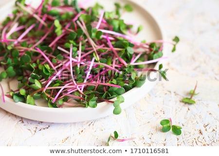 radish sprouts stock photo © joker