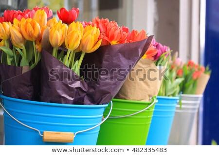primavera · collage · hermosa · flores · flor · luz - foto stock © dariazu