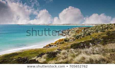 falkland islands stock photo © istanbul2009