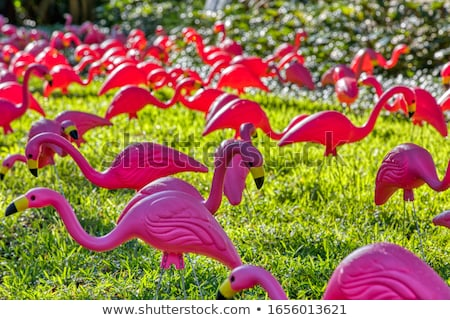 Vogel flamingo cement witte Rood natuur Stockfoto © scenery1