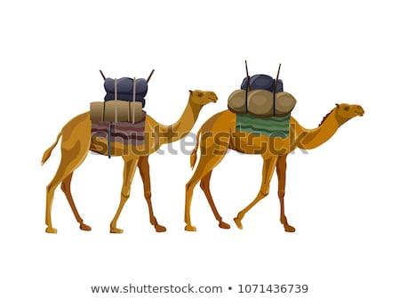 pôr · do · sol · deserto · ilustração · pessoas · equitação · camelo - foto stock © morphart