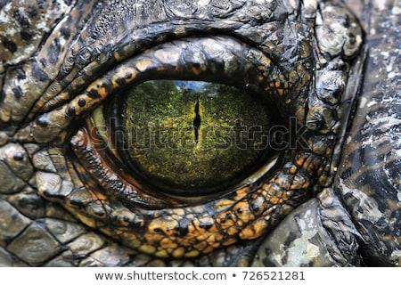 Közelkép krokodil szem néz kamera természet Stock fotó © asturianu
