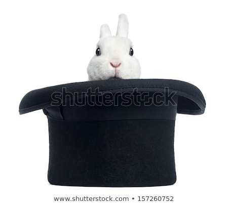 Stok fotoğraf: Tavşan · şapka · yalıtılmış · beyaz · tavşan · siyah