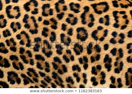 A leopard at the forest Stock photo © bluering
