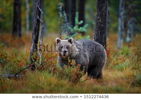 Lagoa ilustração floresta natureza paisagem Foto stock © bluering