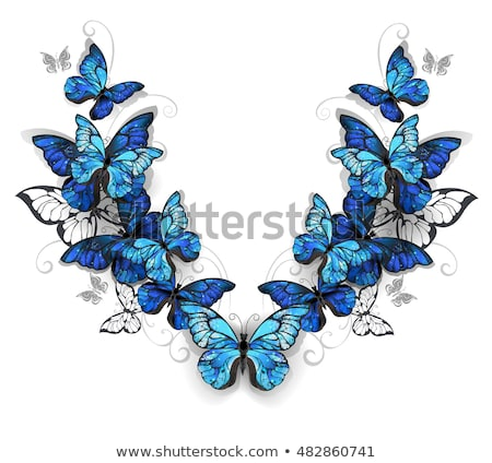 Simétrico padrão borboletas azul realista branco Foto stock © blackmoon979