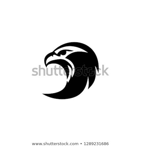 Foto stock: Águia · cabeça · logotipo · vetor · modelo · falcão