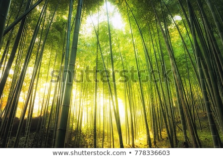 Stock photo: Bamboo forest and sun flare
