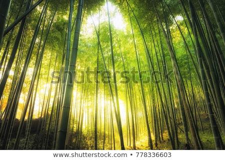 Foto stock: Bambu · floresta · sol · labareda · asiático · ver