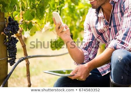 Férfi telefon tart tabletta fiatalember szőlőskert Stock fotó © wavebreak_media