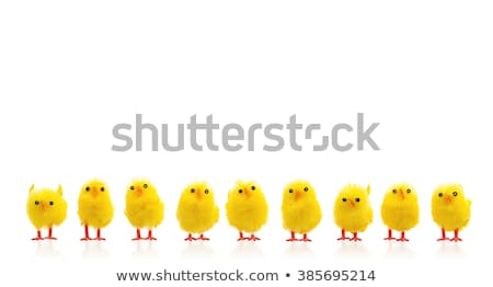 Easter Chicks In A Row Stock photo © monkey_business