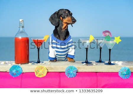 Bassê praia velho marrom sessão feliz Foto stock © cynoclub