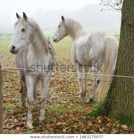 two curious horse in the field Stock photo © compuinfoto