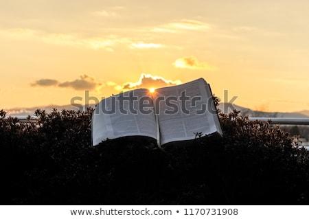 Glorious sunset Stock photo © lovleah